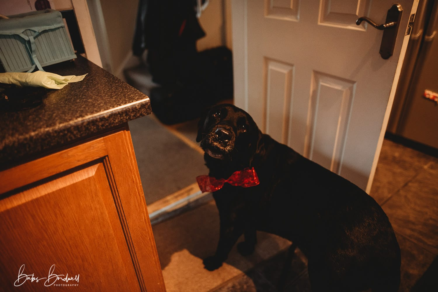 dog with a red bow in the kitchen