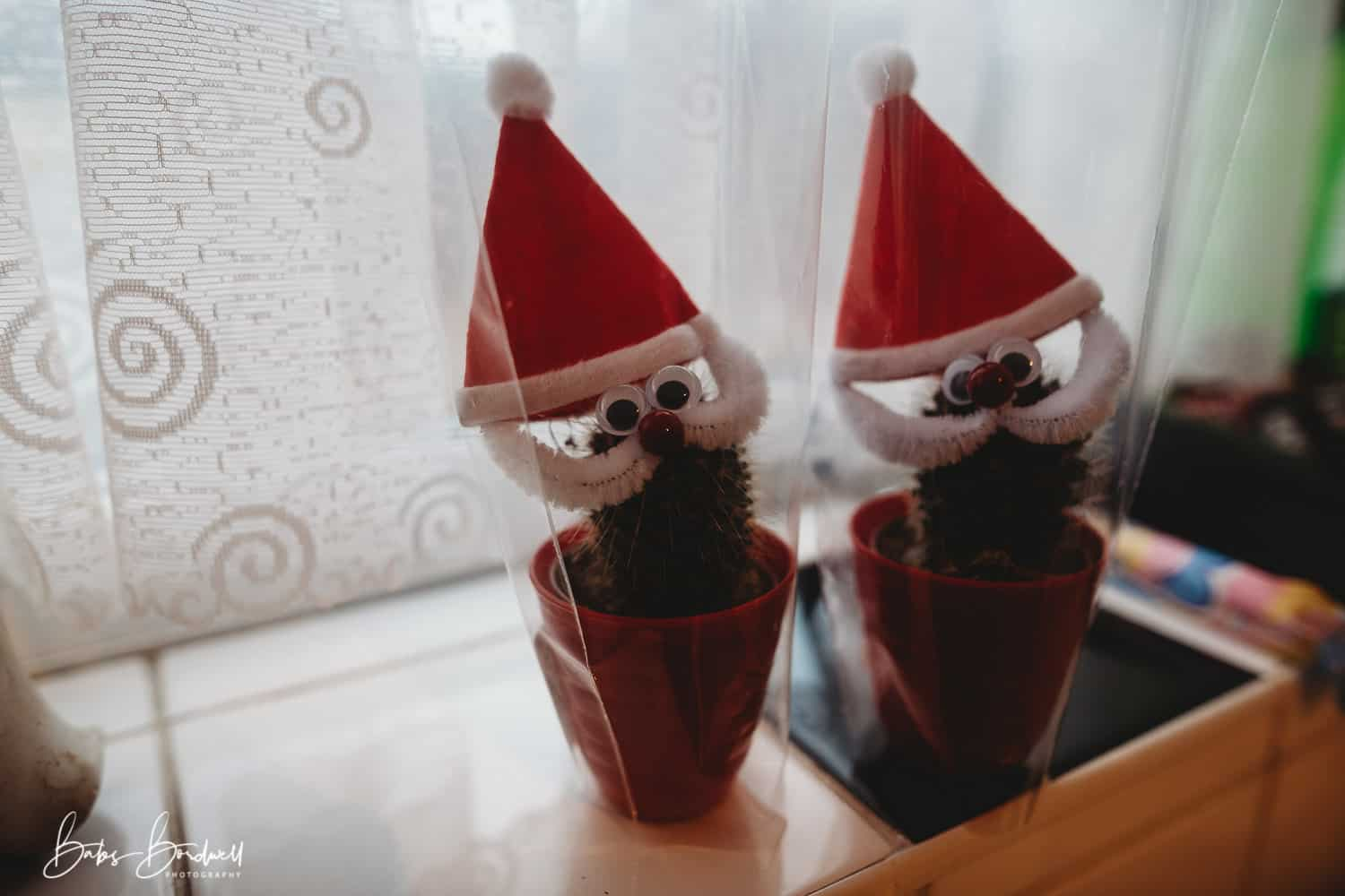 2 cacti decorated as father christmas on window sill