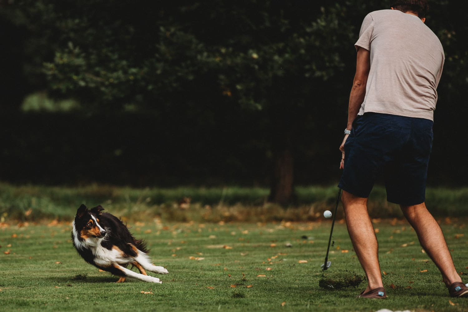 North Wales Wedding Photographer at Pentre Mawr Country House with a dog