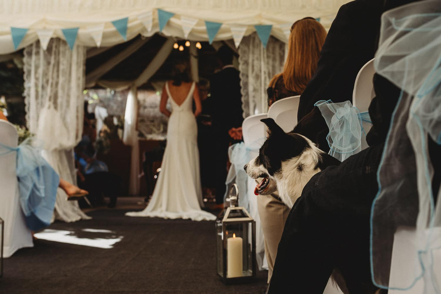 couple getting married in the marquee at Pentre Mawr Country House while a dog looks on