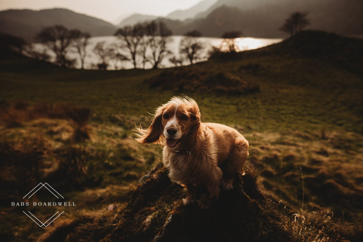 portrait of dog at sunset with lake and mountains in the background