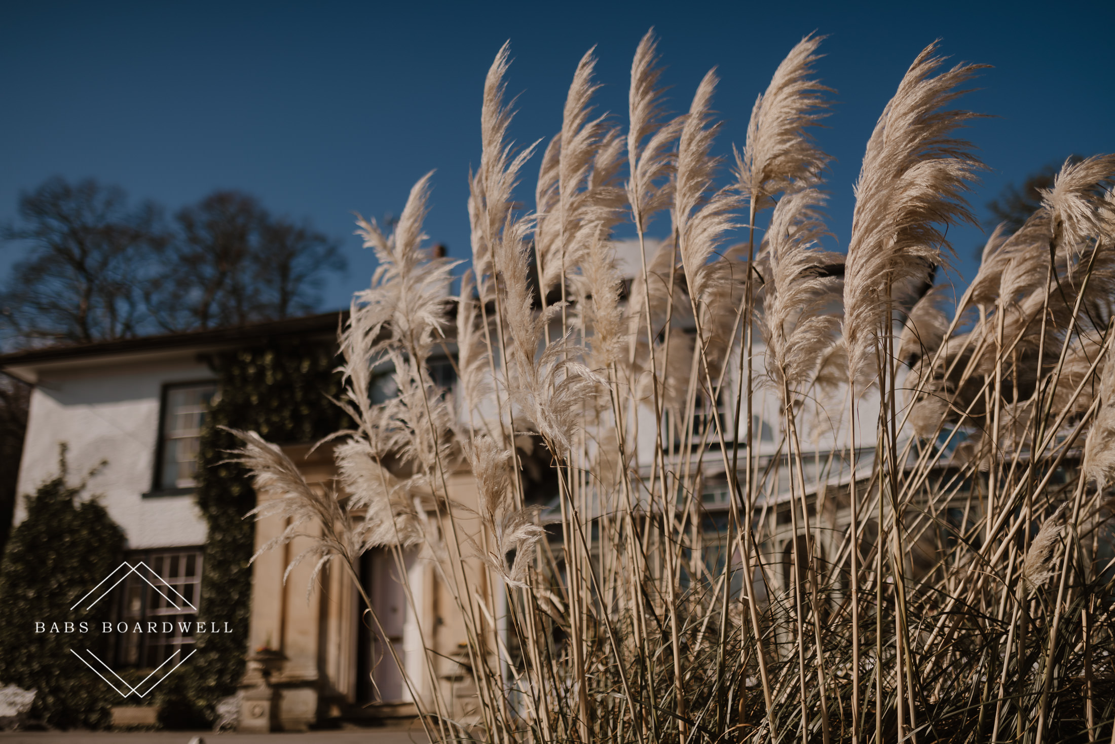 pampas grass at the entrance to Plas Hafod Country House Hotel Mold